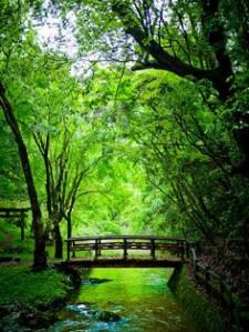cropped-puente-21.jpg
